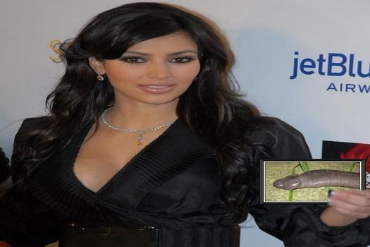 KardashianPenisSnake